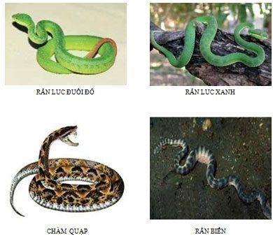 Xử trí trẻ bị rắn độc cắn