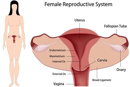 điều trị mỏng niêm mạc tử cung