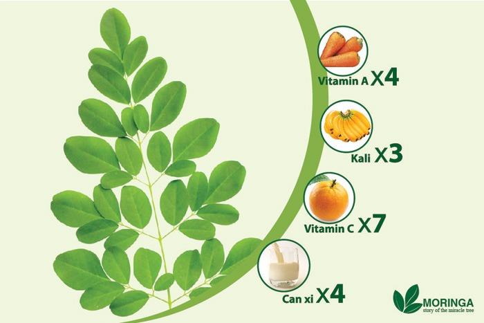 Giá trị dinh dưỡng bất ngờ của cây chùm ngây