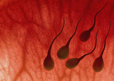 Xuất tinh ra máu – Nguyên nhân, chẩn đoán và điều trị bệnh