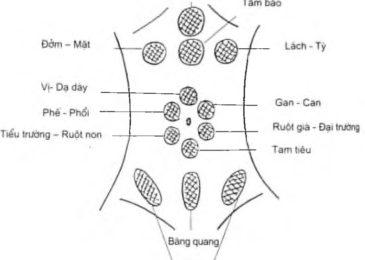 Phương pháp chẩn đoán Yamamoto dùng trong châm cứu cấy chỉ