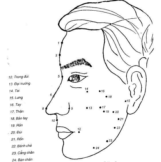 Các huyệt ở mặt (nghiêng)