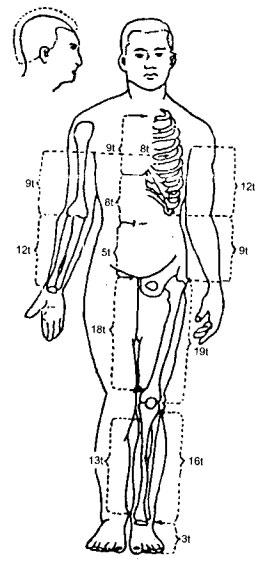 Dựa vào các mốc giải phẫu để lấy huyệt