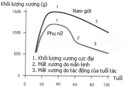 Biểu đồ khối lượng xương đỉnh và sự mất xương hàng năm ở nam và nữ