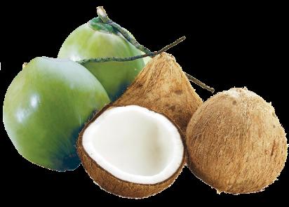 Nước dừa có vị ngọt, tính mát, tác dụng giảm tiêu khát