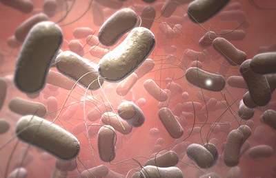 Thương hàn – căn bệnh vẫn tiềm ẩn nguy cơ gây dịch