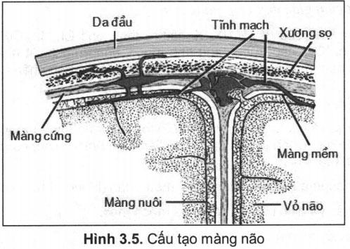 Hội chứng màng não – Triệu chứng thần kinh
