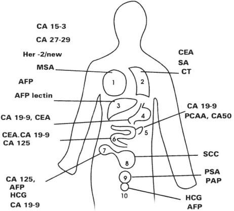 Sơ đồ 3: Các chất chỉ điểm u theo cơ quan