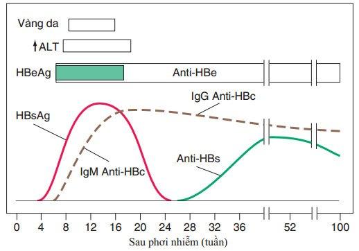 Biểu hiện lâm sàng và cận lâm sàng của HBV
