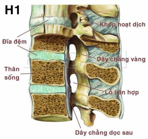 Cấu trúc của cột sống và đĩa đệm.