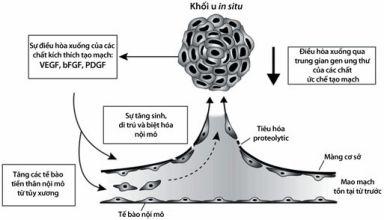 Cơ chế tạo mạch của khối u