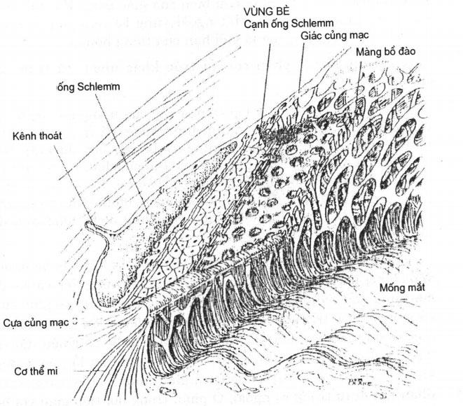 Bệnh Glôcôm ở mắt – Tăng nhãn áp