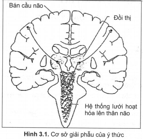 Rối loạn ý thức – Triệu chứng thần kinh
