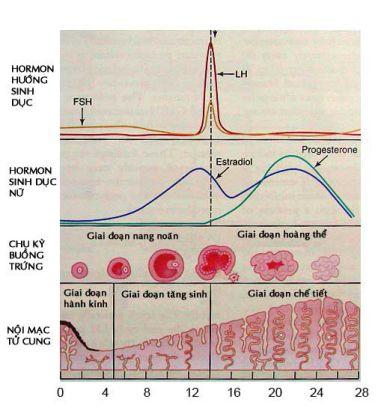 Thay đổi hormon, chu kỳ buồng trứngThay đổi hormon, chu kỳ  kinh nguyệt