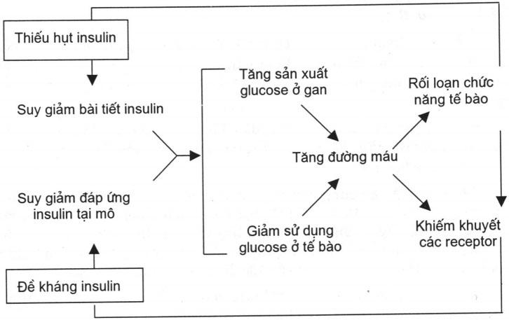 Kháng Insulin và sinh lý bệnh đái tháo đường typ 2