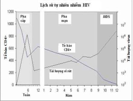 Số lượng tế bào CD4+ và tải lượng virus trong giai đoạn nhiễm HIV-1 cấp