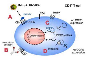 Các chiến lược ngăn cản nhiễm HIV