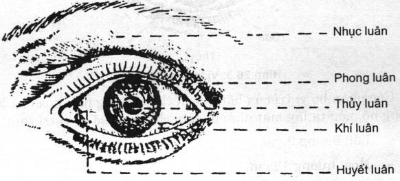 Lý luận cơ bản của đông y trong chữa bệnh mắt – Nhãn khoa