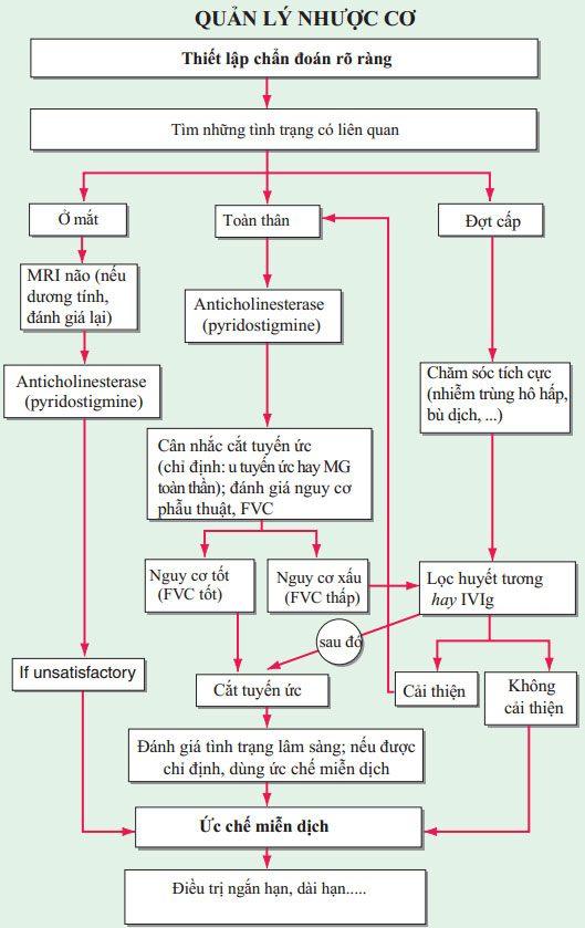 Biểu hiện và điều trị Bệnh Nhược Cơ (MG)