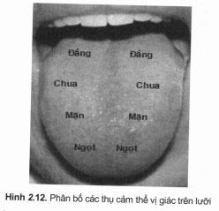 Khám Dây thần kinh mặt (dây VII)