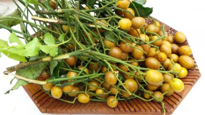 Hạt quả hồng bì tác dụng giảm đau, lợi tiêu hóa, tiêu phù thũng