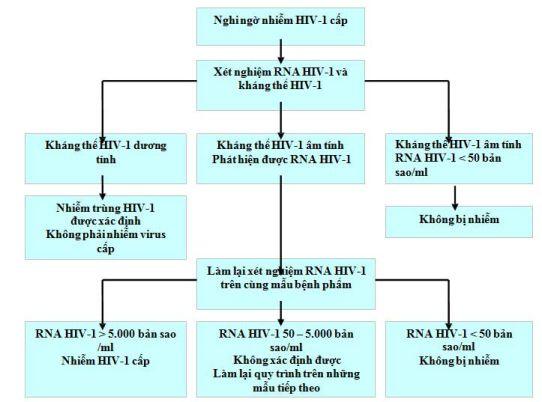 Sơ đồ chẩn đoán nhiễm HIV-1 cấp