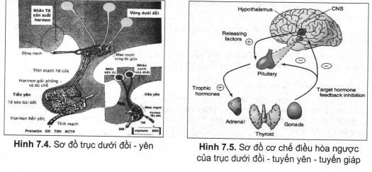 Chẩn đoán và điều trị tổn thương vùng dưới đồi và bệnh lý thần kinh