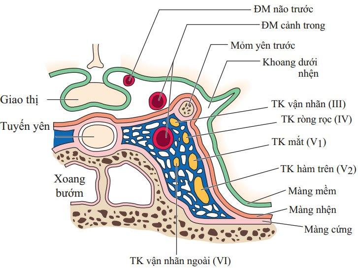 thần kinh sọ