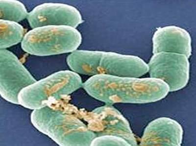 Lỵ trực khuẩn cấp – Bệnh hay mắc nhiều biến chứng và dễ tử vong