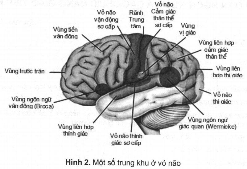 Rối loạn ngôn ngữ và các chức năng giao tiếp khác