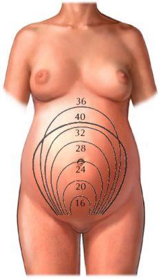 tử cung khi mang thai