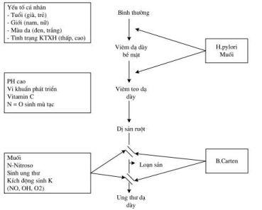 Vi khuẩn HP và phác đồ điều trị hiệu quả