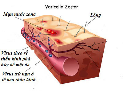 Cấu trúc thần kinh da