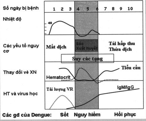 biểu hiện lâm sàng sốt xuất huyết Dengue.